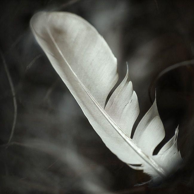 plume-nature-morte--a5e5c1T650